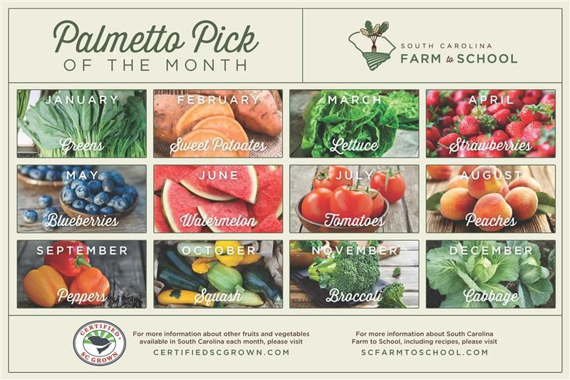 Palmetto Pick of the Month
